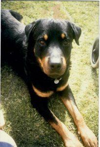 Martins Hund Kuno